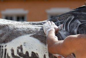 Produkty do Pielęgnacji Koń