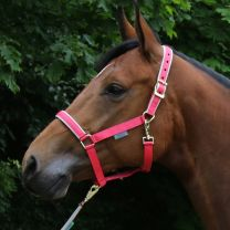 Bucas  Halter Dublin Pony Paradise Pink