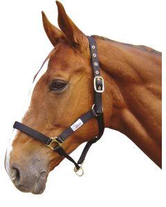 Harry's Horse Kontroler kantarowy