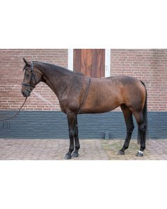Harry's Horse Lunging Aid Soft