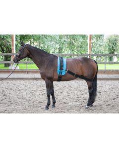 Harry's Horse Elastyczny pas do lonżowania