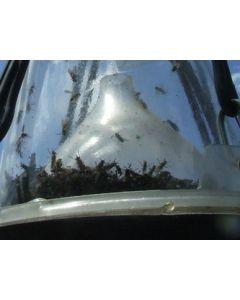 Hofman Pułapka na muchy końskie Czający się luźny lejek