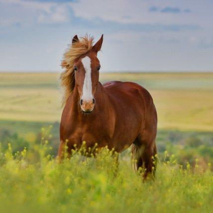 Derki od 165cm Koń (koń)